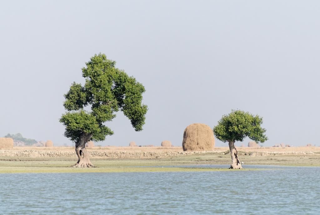 Haystacks along the river